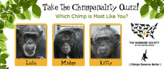 The Humane Society of the United States - Chimpanality Quiz