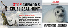 The Humane Society of the United States - Stop Canada's Cruel Seal Hunt